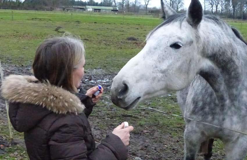Aromatherapie Pferd Tierheipraktiker Dr. Volkmann Hamburg