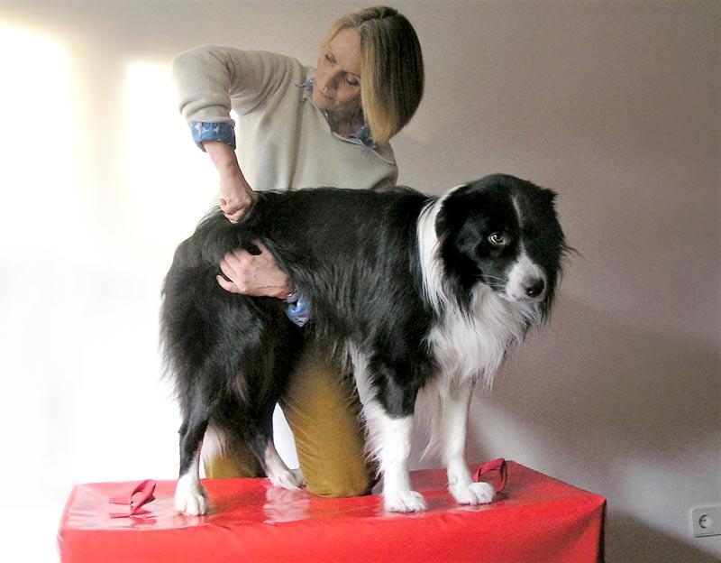 Chiropraktik Hund Dr. Volkmann Hamburg