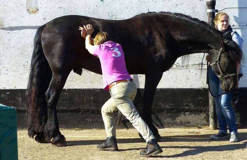Chiropraktik Pferd Dr. Volkmann Hamburg