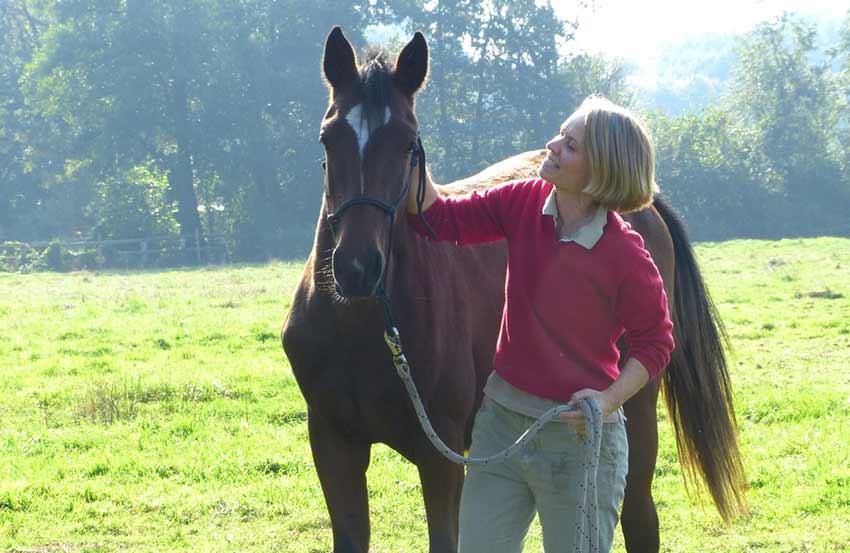 Pferde Verhaltenstraining Dr. Volkmann Hamburg