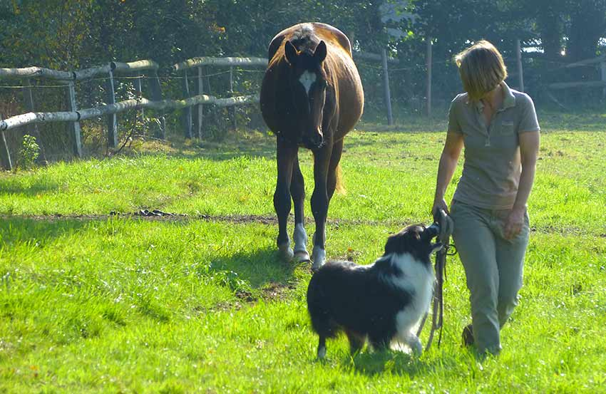 Verhaltenstraining Pferde Dr. Silke Volkmann Hamburg