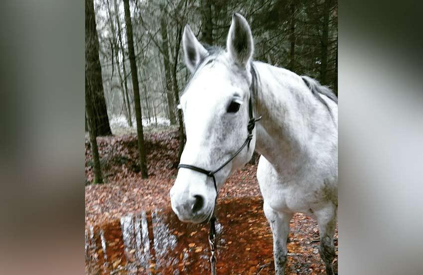 Coaching Spaziergang Pferd Hund 6