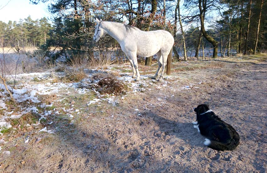 Coaching-Spaziergänge mit Pferd